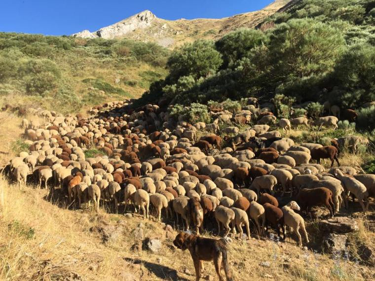 Abelgas sheep to port