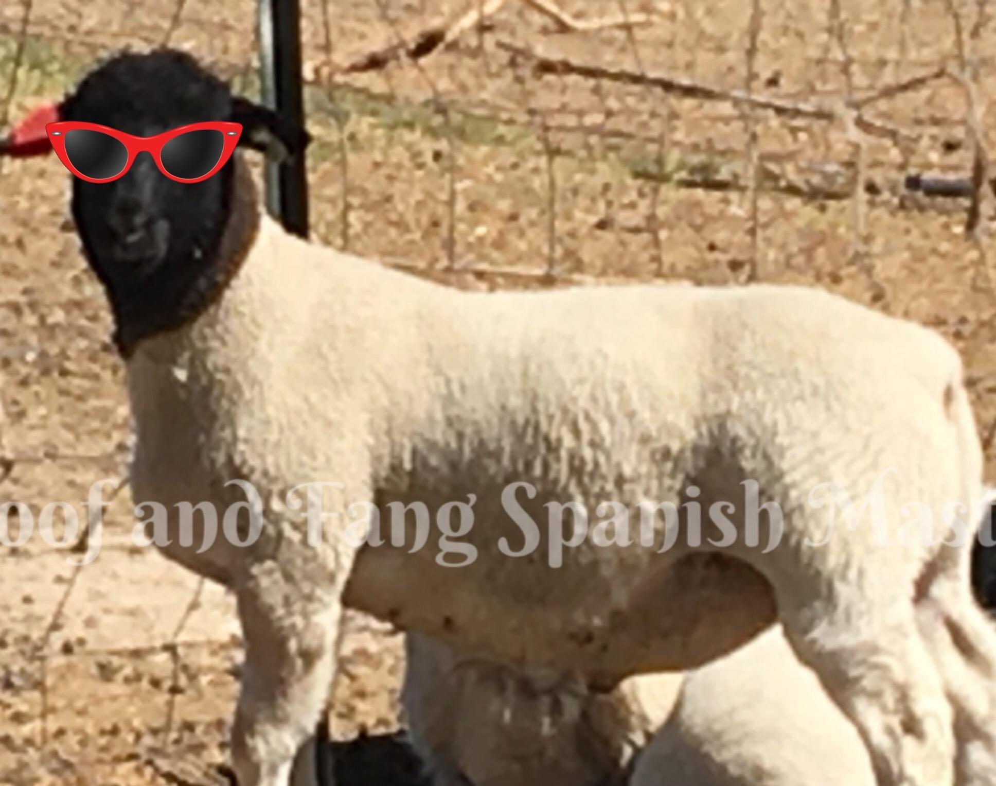 7b11b6a6b7e Dairy Goats – Hoof and Fang Spanish Mastiffs